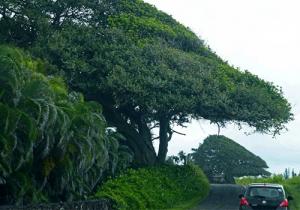 Road-Hana_Maui
