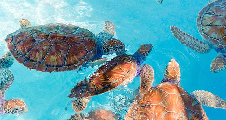 Mexico's Riviera Maya - Turtles